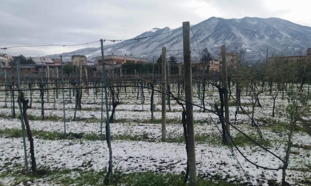 Nocerino Vini - Tenuta Augustea