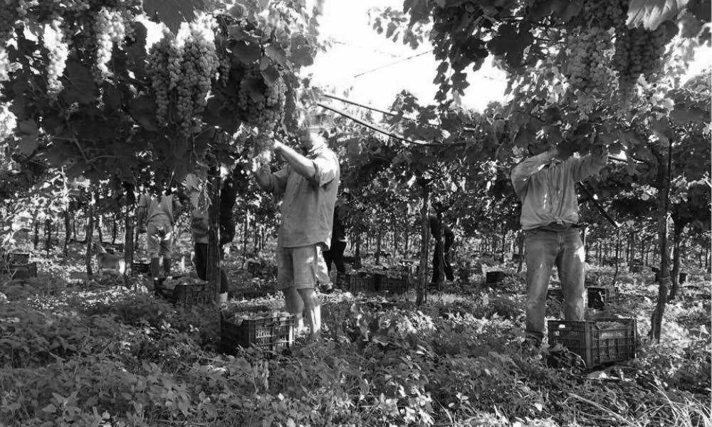 Tenuta Augustea Campania wines