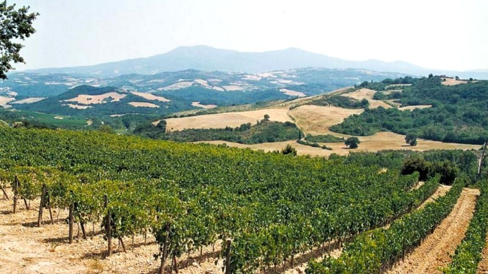 Fornacina - Italy's Finest Wines