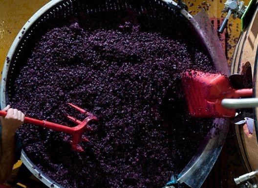 Come si fa il vino? Scoprilo passo per passo